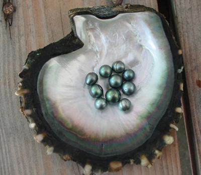Perle noire de tahiti et huitre