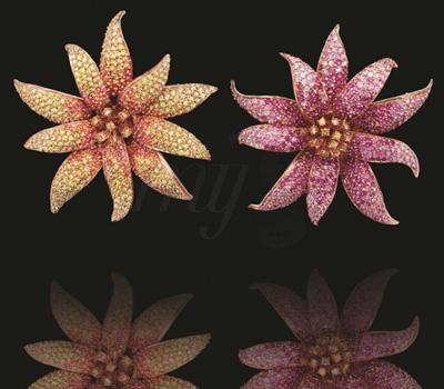 Bijoux Fleurs en Saphirs - Burma