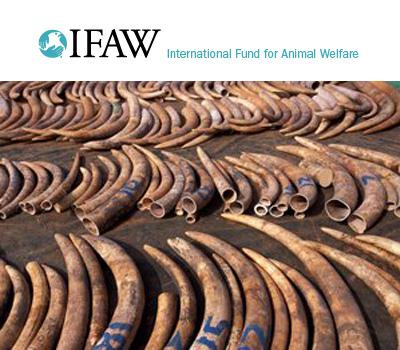 Saisie d'ivoire à Zanzibar